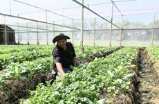 Soc Trang depends on efficient farming models to beat climate change