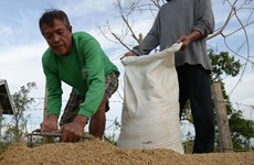 Philippines plans to increase rice imports to ensure domestic supply
