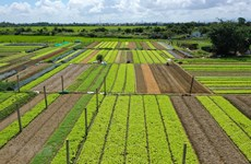 QI agriculture posts nearly 49 percent growth in trade surplus