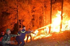Dong Nai proactive in preventing forest fires