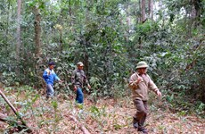 Binh Phuoc tightens forest protection in dry season