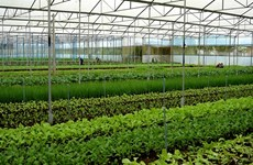 Ba Ria-Vung Tau applies hi-tech agriculture to improve quality, yield