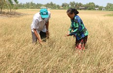 Mekong Delta provinces get help to cope with drought