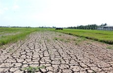 Ministry proposes over 515 billion VND to deal with salinity, drought