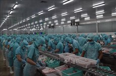 Dong Thap helps fish exporters amid lower demand during COVID-19