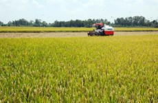 VFA demands priority clearance for rice stuck at ports