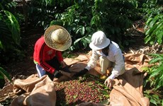 Coffee industry to face more losses in Q2