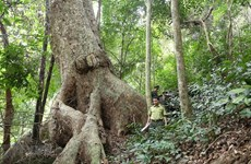 Vietnam boasts 14.6 million ha of forest in 2019