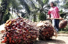 Indonesia's palm oil exports fall due to pandemic
