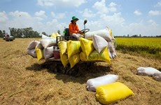 Localities, exporters propose lifting rice export limits