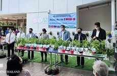 Vegetable sprouts distributed for Bangkok residents in lockdown