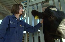 "Australia funds training of ""animal disease detectives"""