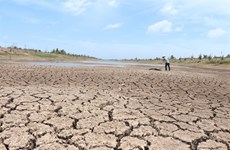 Drought, saltwater dry up Mekong Delta's largest reservoir