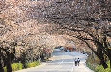 Photo contest helps recall memories of travel to RoK