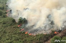 Forest fires complicate COVID-19 fight in Indonesia