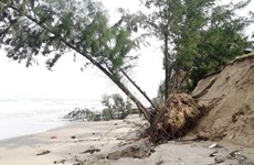 Underwater dyke set to save Cua Dai beach from erosion