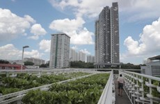 Singapore to build farms on carpark rooftops