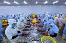 Vietnam's shrimp exports forecast to reach 3.8 billion USD in 2020
