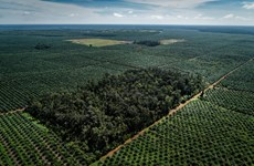 Thailand to use blockchain to facilitate palm oil trade