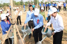 Tree planting campaigns launched to mark President Ho Chi Minh's birth anniversary