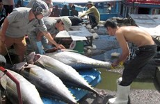 Tuna export market still unstable