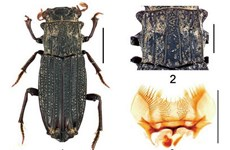New insects discovered in Vietnam