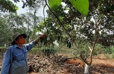 Southern fruit farmers plagued by poor harvest, low prices