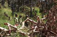 Deforestation continues to rage in Vietnam