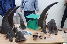 Man imprisoned for trafficking rhino horns