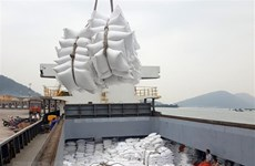 Rice exports grow in both volume and value