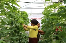 Bac Giang developing hi-tech agriculture to foster economic growth
