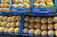 Cambodia to export 500,000 tonnes of mangoes to China annually