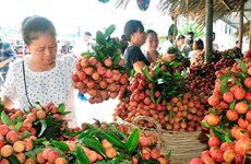 Central Retail to buy 1,000 tonnes of lychee