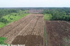 Indonesia expands rice fields on Borneo island
