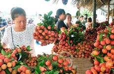 Veggie, fruit exports exceed 1.5 billion USD in first half