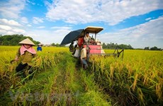 Tra Vinh: Climate change adaptation project benefits the poor
