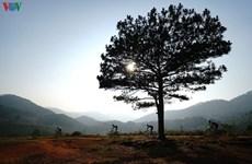 Dalat Ultra Trail 2020 opens