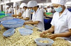 Cashew nut exports grow in first five months