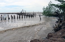 Kien Giang mobilises all resources to counter coast erosion
