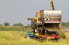 Thailand plans to recover agriculture
