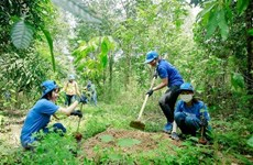 Vietnam ready to carry out REDD+