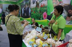 Hanoi has 275 more municipal-level OCOP products