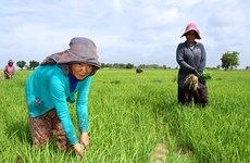 WB okays 93-mln-USD credit for Cambodia to improve land tenure security for poor farmers