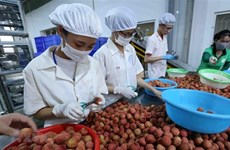 Vietnam, Japan discuss boosting trade of consumer goods