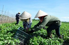 Mid-term rural, agricultural survey to begin on July 1
