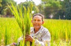 Cambodia encourages unemployed people to take up farming