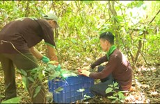 Quang Binh: Over 40 animals released in national park