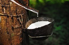 Thailand's rubber industry faces gloomy outlook