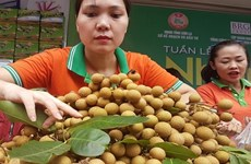 Son La province to export 9 million USD of longan