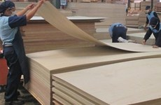 Plywood exports face trade defence risks in US, RoK